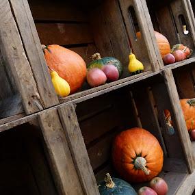 """Pumpkins"" by Peter Wabbel - Public Holidays Halloween ( herbst, calabazas, kürbisse, autumn, pumpkin, pwcpumpkins, otoño, pumpkins, halloween )"