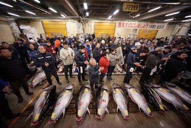 マスコミさん、のん気な報道してねぇで、ホントはヤバい「魚の資源枯渇の危機」を報じてくれ!