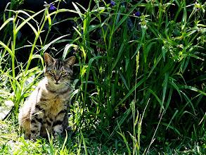 Photo: I tossed it a Dorito fur posing for #caturday