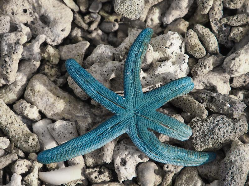 Un po' di blu tra il bianco dei coralli di robypsycho