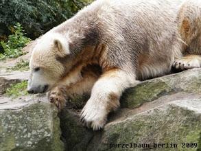 Photo: Knut beobachtet das aufmerksam ;-)