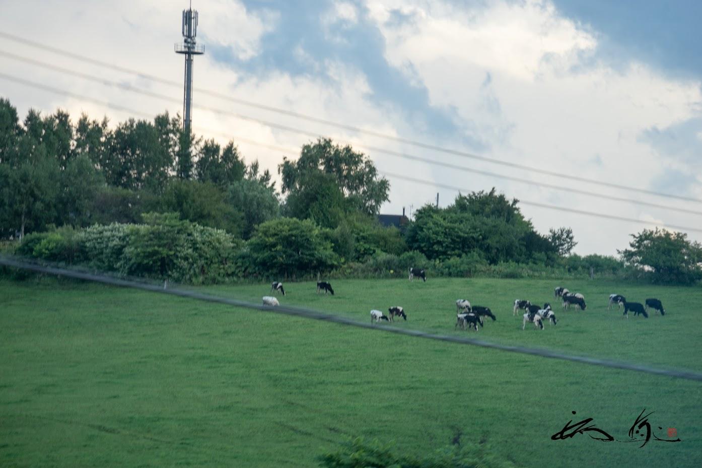 田村ファームの牛ちゃんたち