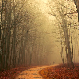 A Woman in Fog by Sue Matsunaga - Landscapes Forests