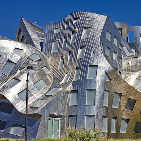 Brain crazy by Chris Pugh - Buildings & Architecture Office Buildings & Hotels