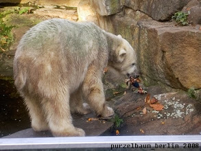 Photo: Widmet sich Knut erst einmal dem Kong ;-)
