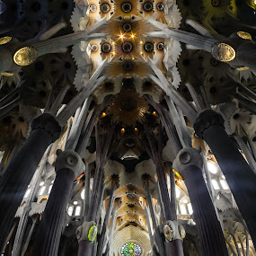Looking Upwards In Sagrada Familia, Barcelona by Andrey Dayen - Buildings & Architecture Other Interior ( interior, church, barcelona, spain, panorama )