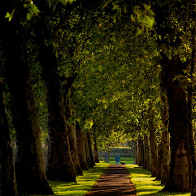 by Colin Dixon - City,  Street & Park  Neighborhoods ( autumn, holland, trees, walk, shadows )