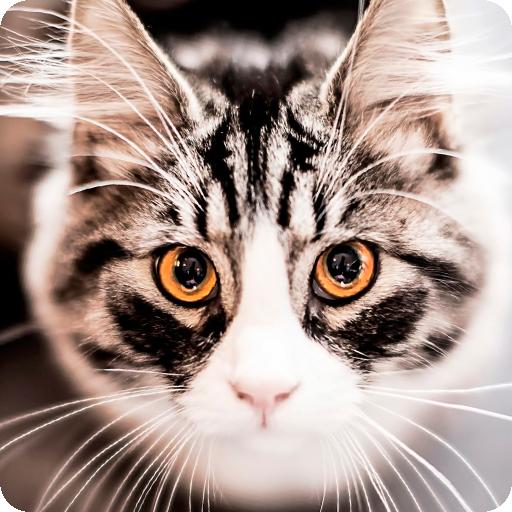 고양이 벽지 個人化 App LOGO-硬是要APP