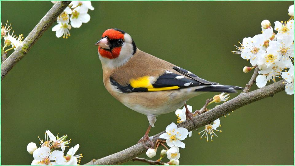 Beautiful Bird Wallpapers Android Apps on Google Play