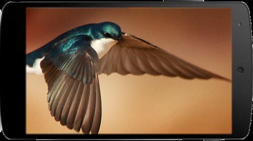 All Birds Sounds