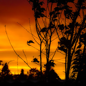 by David  Clayton - Digital Art Things ( orange, sunset, silhouette, abstract,  )