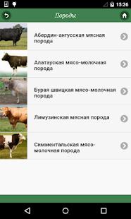 Крупный рогатый скот - náhled