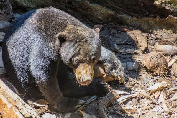Borneo Sun Bear Conservation Center