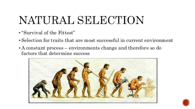 Explain Natural Selection In Your Own Words
