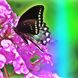 Swallowtail by Diane Merz - Digital Art Things