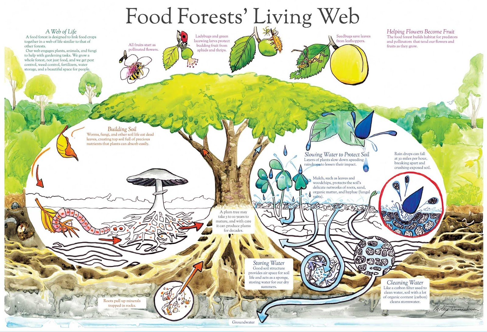 Food Forests' Living Web