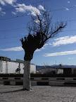 Odborný řez v koruně stromu na nádraží.