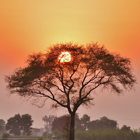 Colors of Nature by Arsalan Sandhila - Landscapes Sunsets & Sunrises ( dusk, tree, photo, paddy field, sun, picture, field, sunset, farm, evening, photography, fireball, paddy )