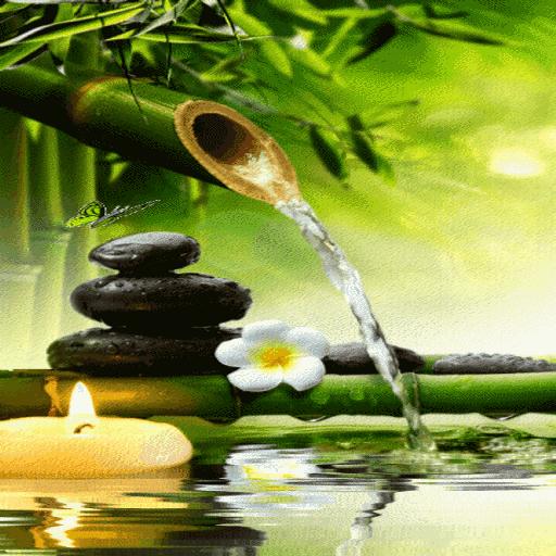 Bamboo Water Live Wallpaper