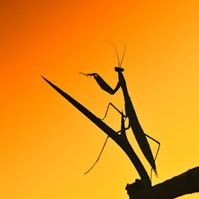 Hua by Uroš Florjančič - Animals Insects & Spiders