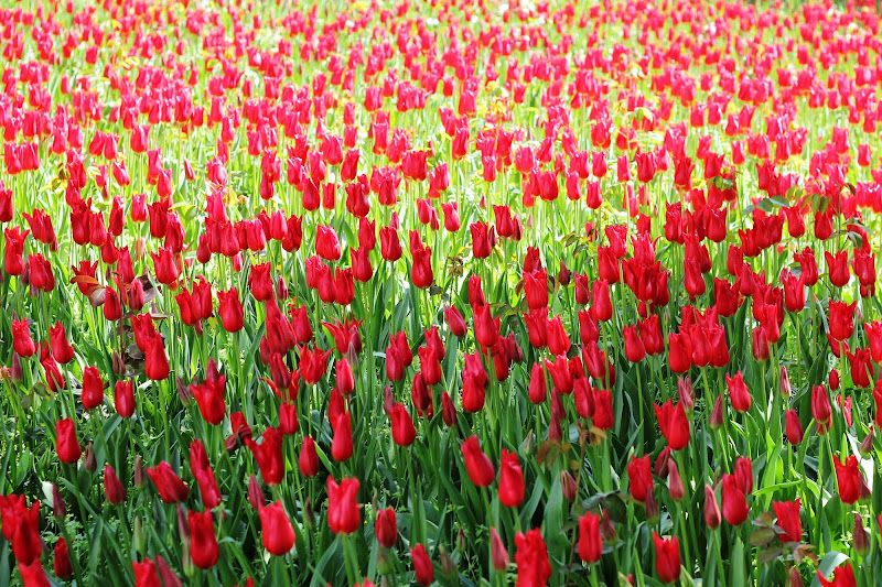 Primavera a Istanbul di scerda