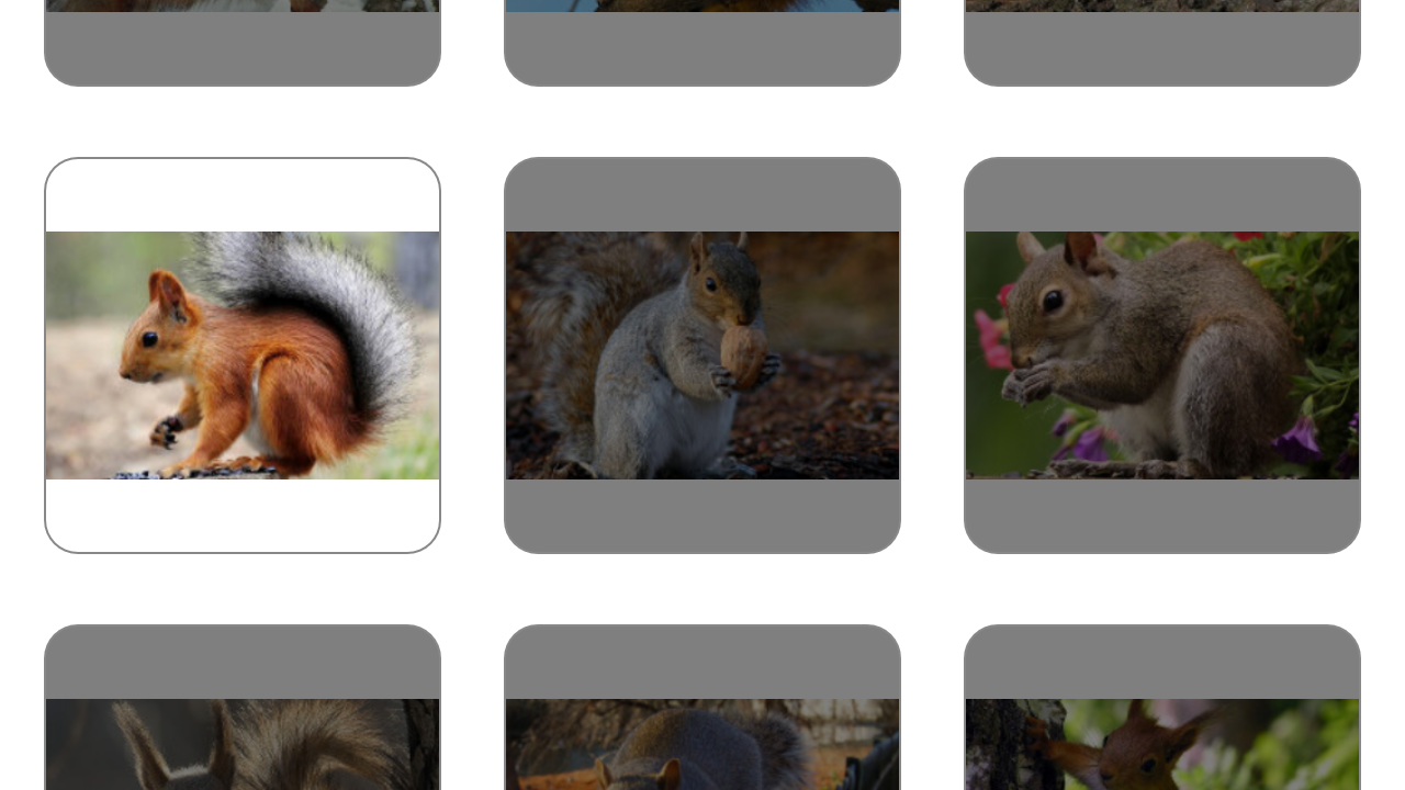 Squirrel Puzzles. - screenshot