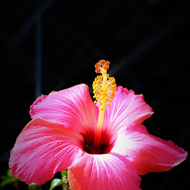 by Michelle Brush - Flowers Single Flower