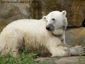 Photo: Bye for today wuenscht ein zufriedener Knut :-)