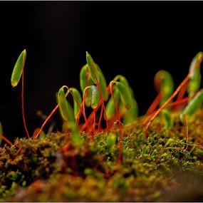 Moss Lanterns by Savio Joanes - Nature Up Close Other plants