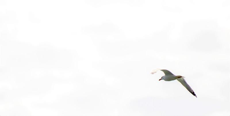 Più alto vola e più vede lontano. di Mony68