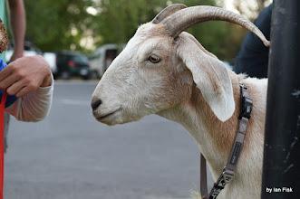 Photo: Gary the Goat