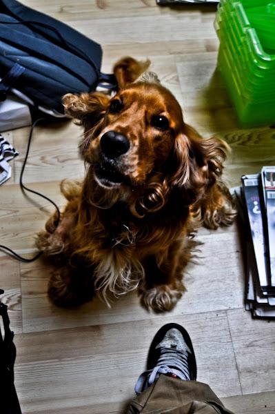 Photo: again my dog Billy Boy