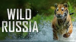 Wild Russia thumbnail