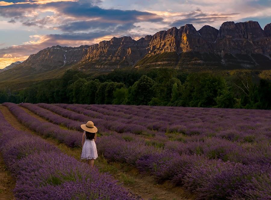 the journey by Gigi Kent - Landscapes Prairies, Meadows & Fields