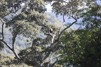 Photo: Fish Eagle. The day of the BIG move to campsite 2.