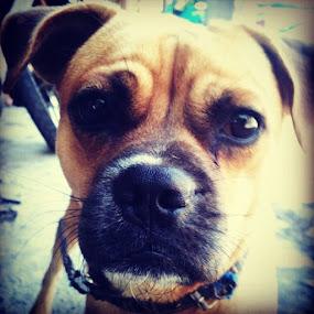 by Yudya Daton - Instagram & Mobile Instagram ( dog, fansdog, balidog, bali, budjettourowner, poponames, pittbul )