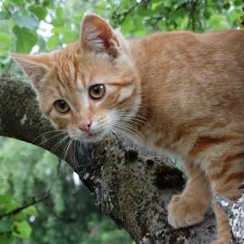 by Rita Bugiene - Animals - Cats Kittens