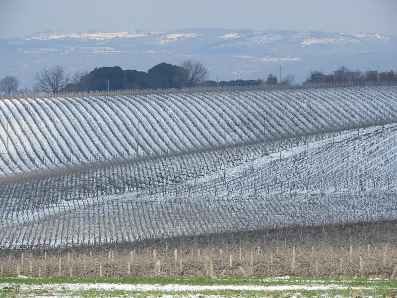 Neve tra i filari di claudio_sposetti