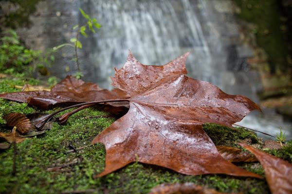 L'autunno è arrivato di Gianluca Presto
