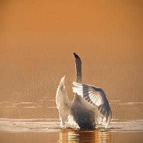 O sole ... by Uroš Florjančič - Animals Birds