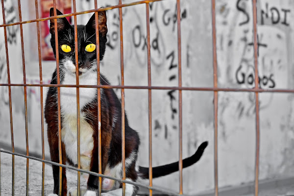 Lockdown cat di Through_my_eyes