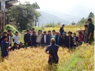 Photo: Demonstration for trainees at an SRI field trial conducted by Bhutan's College of Natural Resources during the 2008 growing season.  [Photo courtesy of Kharma Lhendup, Bhutan, 2008]