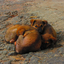 Photo: Resident puppies outside the Kandy house.
