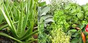 Apl Plantes médicinales (APK) percuma muat turun untuk Android/PC/Windows screenshot