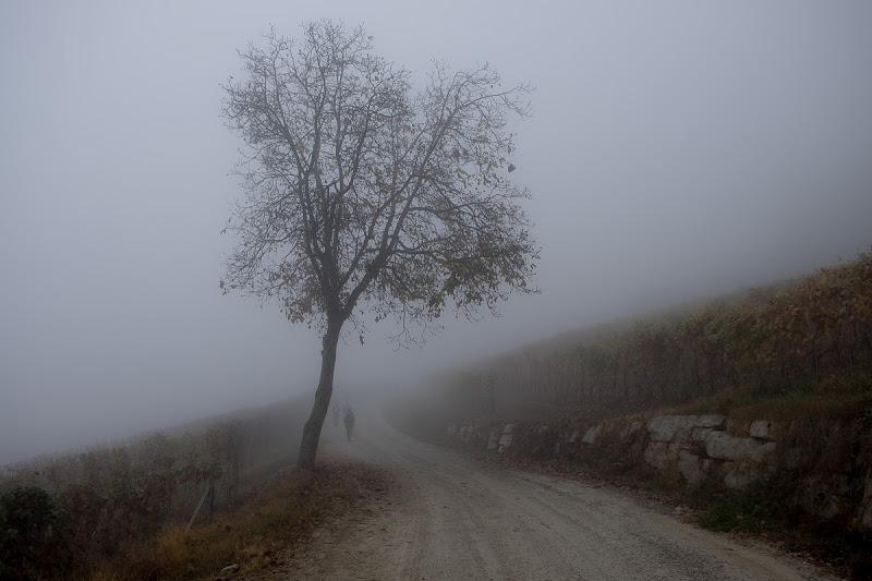 Camminata tra le vigne di Tiziana Detoni