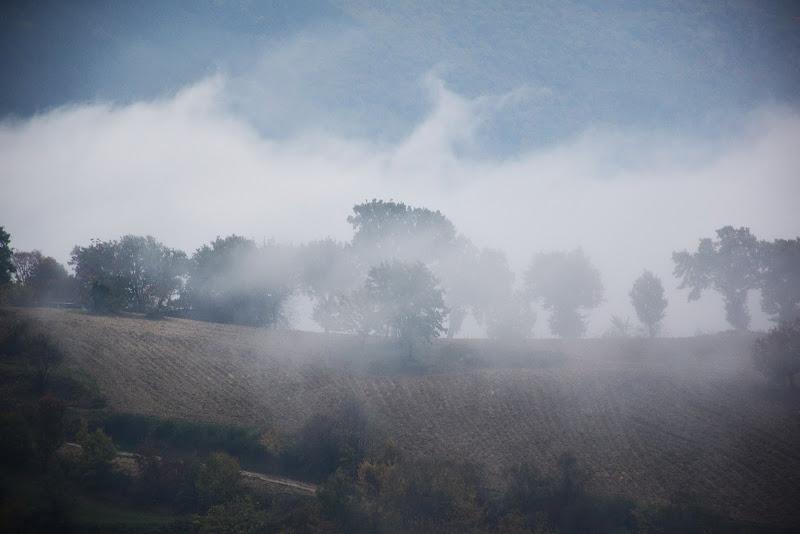 nella nebbia  di battphoto