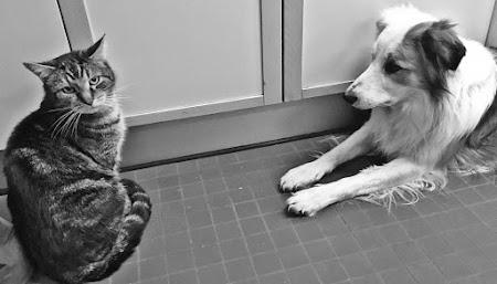 Hoe Hond tot een doorbraak kwam (deel2)