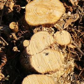 by Vladimir Stojićević - Nature Up Close Trees & Bushes
