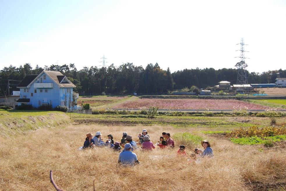 眼下には、コスモス畑が広がります。この後、みなさんコスモスを摘むのを楽しんでました。