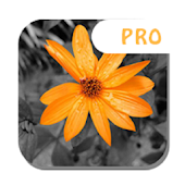 Color Splash Pro Android APK Download Free By Pineapple Infotech